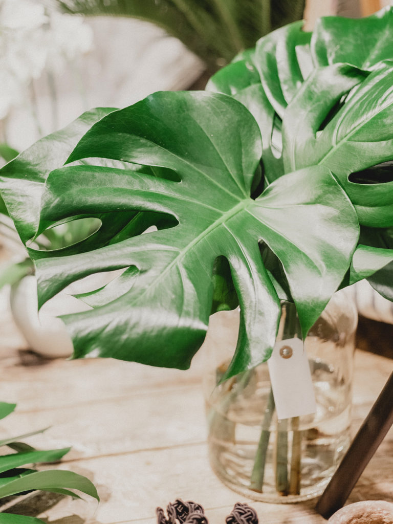 Große Blätter als natürliche Sommerdeko